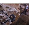 visual leverancier Gorillapod SLR-Zoom met balhoofd BH1