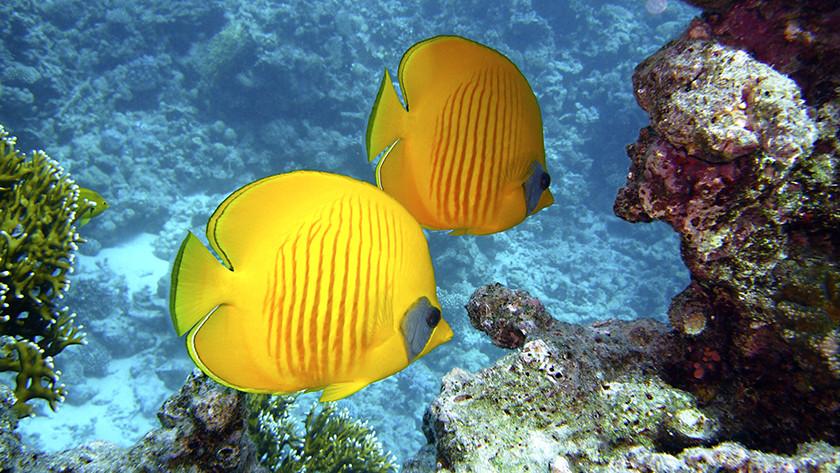 fel gekleurde vissen