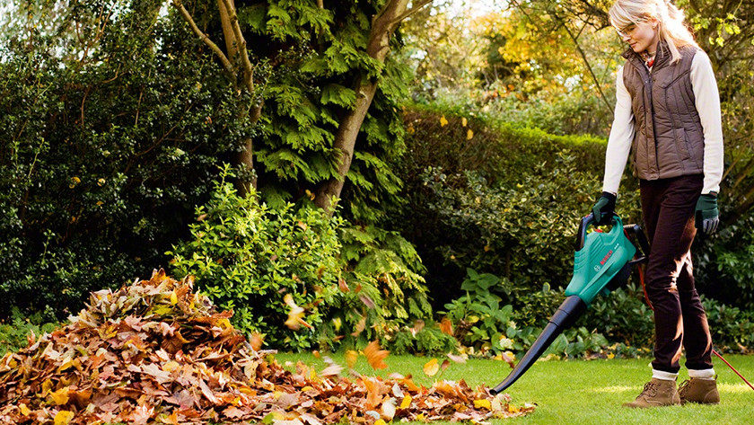 Lawn free from leaves