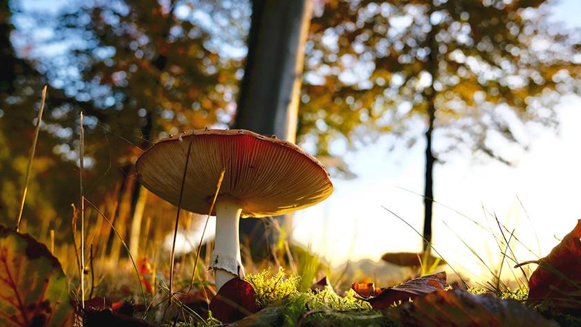 Herfstkleuren ontdekken
