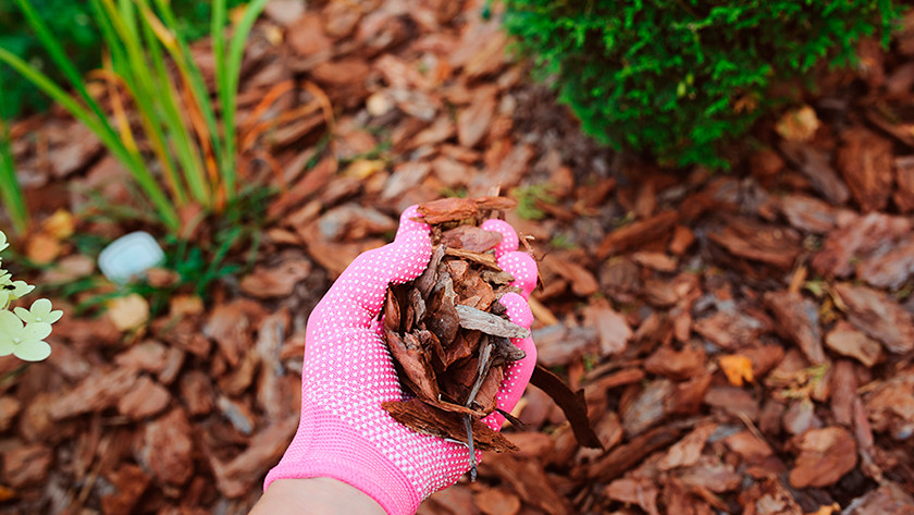 Mulch layer
