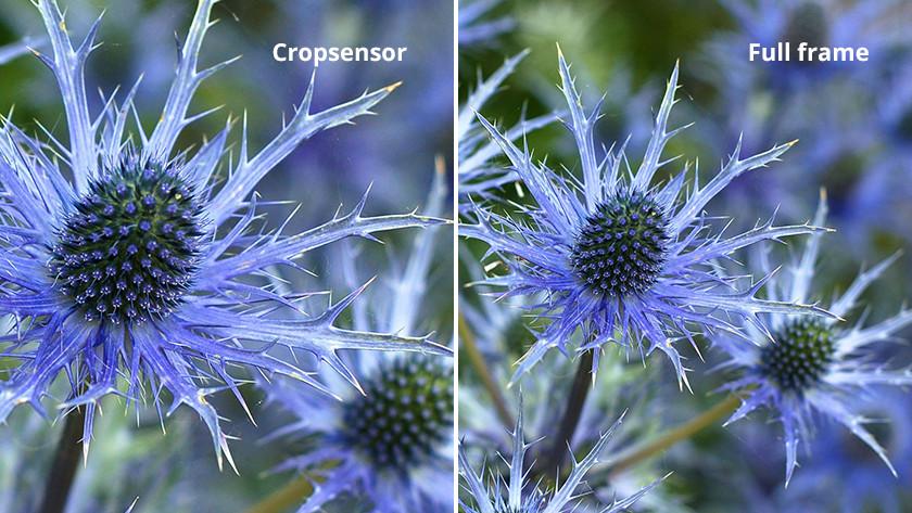 Full frame sensor vs cropsensor
