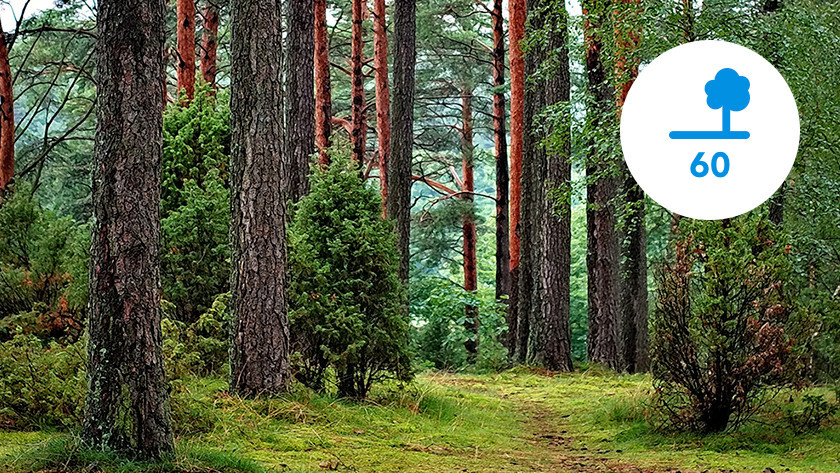 Number of trees needed CO2 emissions