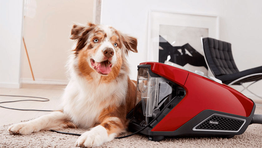 Pet hair allergy vacuums