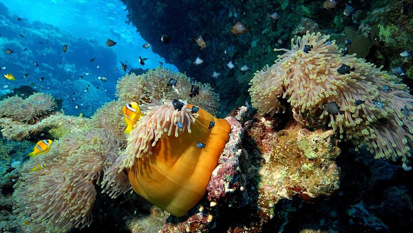levendig koraal