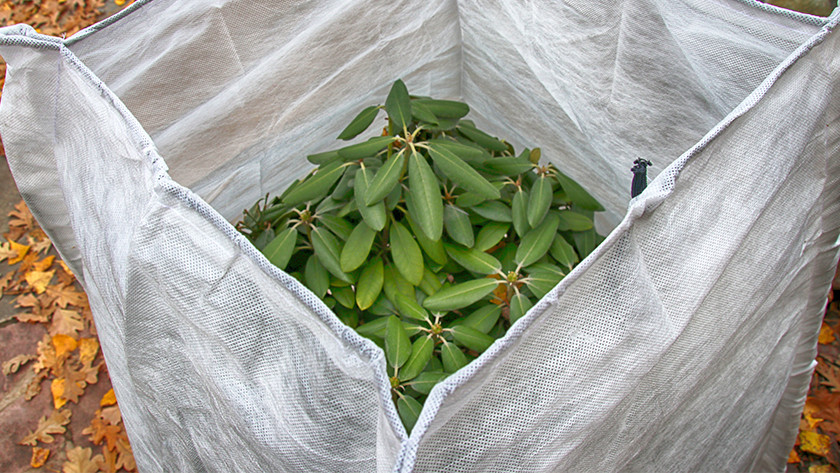 Protect outdoor plants against the cold