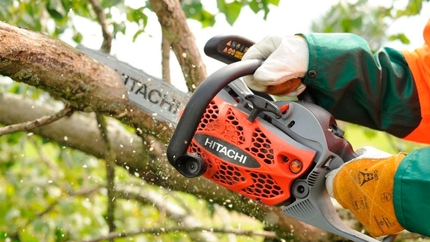 Cutting down large, living trees with a chainsaw