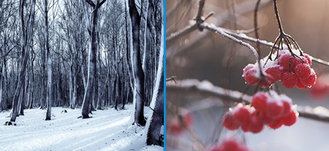 5 tips winterfotografie