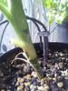 Gardena Vakantiebewatering (Afbeelding 5 van 5)