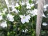 Canon Powershot SX620 HS Wit (Afbeelding 2 van 4)