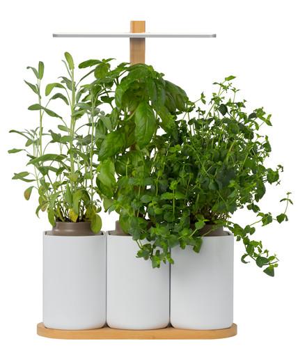Pret a Pousser Indoor Garden Lilo Main Image