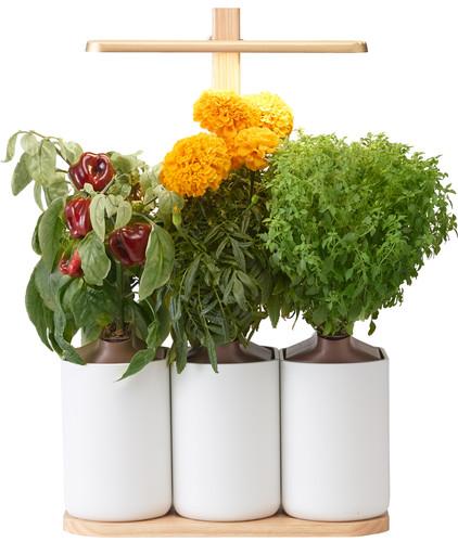 Pret a Pousser Indoor Garden Lilo Edition Main Image