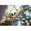 product in gebruik Arlo Smart Home HD-camera Four Pack