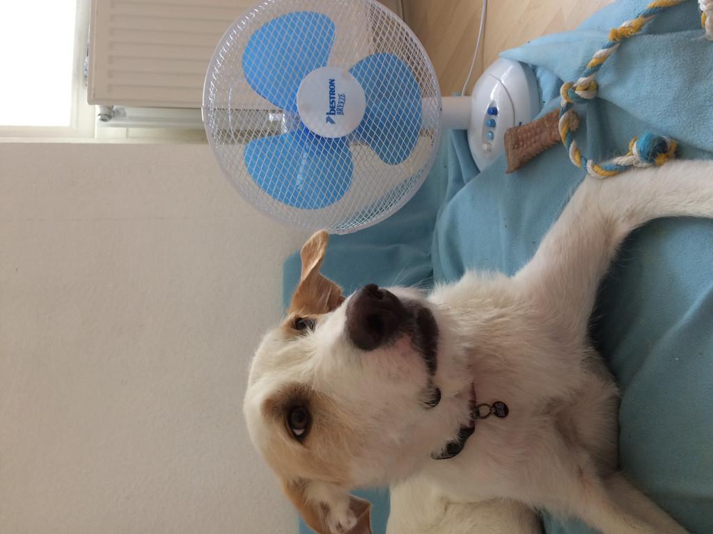 Leuke Ventilator Huis : Reviews over bestron ddf35z coolblue voor 23.59u morgen in huis