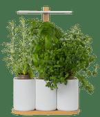 Pret a Pousser Indoor Garden Lilo